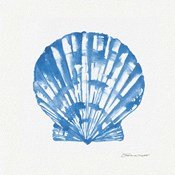 Shell In Blue