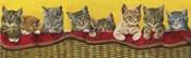 Eight Kittens In Basket