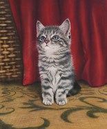 Grey Kitten And Red Curtain