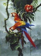 Red And Yellow Macaws