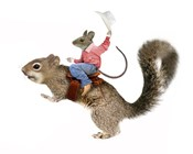 Squirrel Rodeo