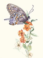 Butterfly Design 1