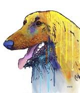 Afghan Hound 2