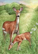 New Mother and Fawn