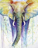 Elephant Colors