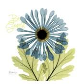 Grateful Chrysanthemum H68