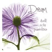 Purple Chrysanthemum Dream