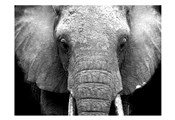 Elephant Lore