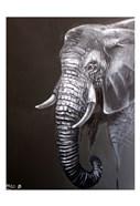 Elephant Grounds 1