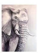 Elephant Trail 1