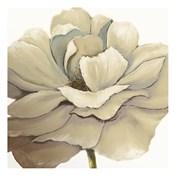 Cream Silken Bloom