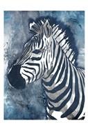 Grey Blue Zebra