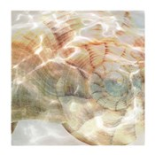 Shell Abstract 1