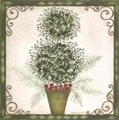 Topiary IV