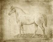 Horse Anatomy 101
