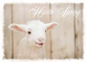Hello Spring Lamb