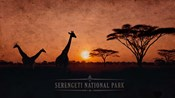 Vintage Sunset with Giraffes in Serengeti National Park, Africa