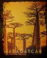Vintage Baobab Trees in Madagascar, Africa