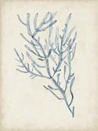 Seaweed Specimens III
