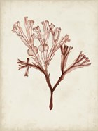 Seaweed Specimens V