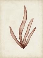 Seaweed Specimens VIII
