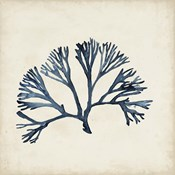 Seaweed Specimens XI