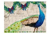 Christmas Postcard Peacock