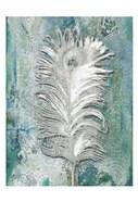 Silvery Peacock 1