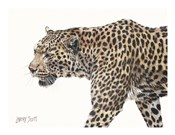 Passing Leopard