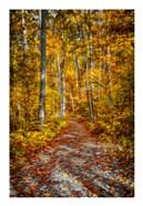 Ohiopyle Path