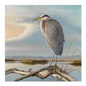 Marsh Watch - Great Blue Heron