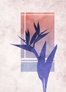 Ombre Bird of Paradise Flower
