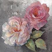 Roses on Gray I
