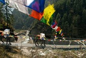Mule train on trail to Namche Bazaar, Larja Bridge, Khumbu, Nepal