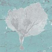 Graphic Sea Fan VIII