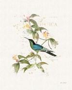 Colorful Hummingbirds IV