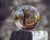 Pop of Color Glass Sphere