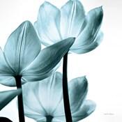 Translucent Tulips III Sq Aqua