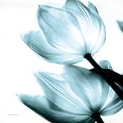 Translucent Tulips II Sq Aqua