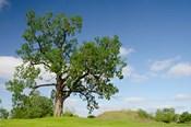 Mississippi, Greenville Winterville Mounds