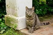 Mississippi, Columbus House cat at Waverley Plantation Mansion