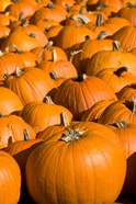 Pumpkins in the city of Concord, New Hampshire