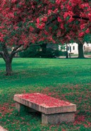 Crab Apple Trees in Prescott Park, New Hampshire