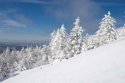 Snowy Trees on the Slopes of Mount Cardigan, Canaan, New Hampshire