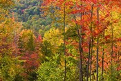 Forest in Grafton, New Hampshire