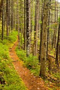 A trail around Ammonoosuc Lake, White Mountain National Forest, New Hampshire