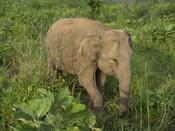 Elephant at Hurulu Eco Park, Sri Lanka