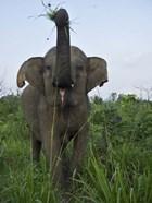 Hurulu Eco Park, Sri Lanka
