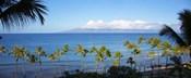 Palm Trees on the Beach, Maui, Hawaii