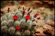 Desert Flower 3